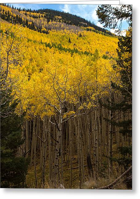 Aspen Audience Greeting Card by Bill Cantey
