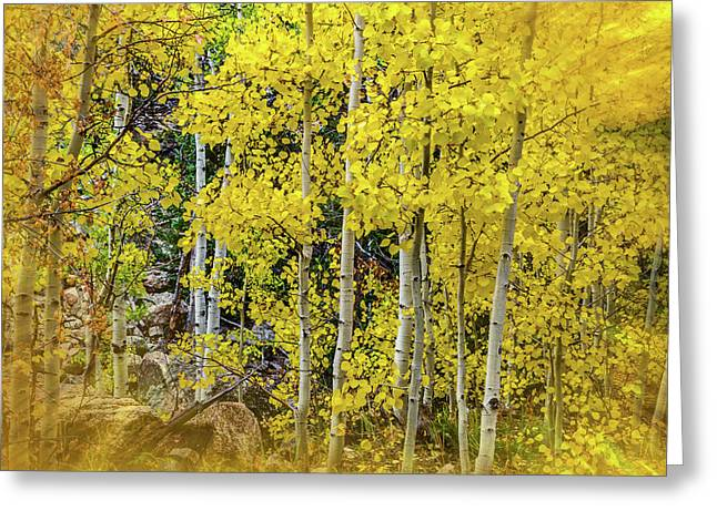Aspen Autumn Burst Greeting Card