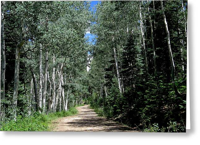 Aspen Avenue Greeting Card by Feva Fotos