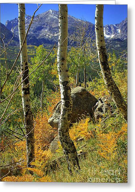 Aspen Curves Greeting Card