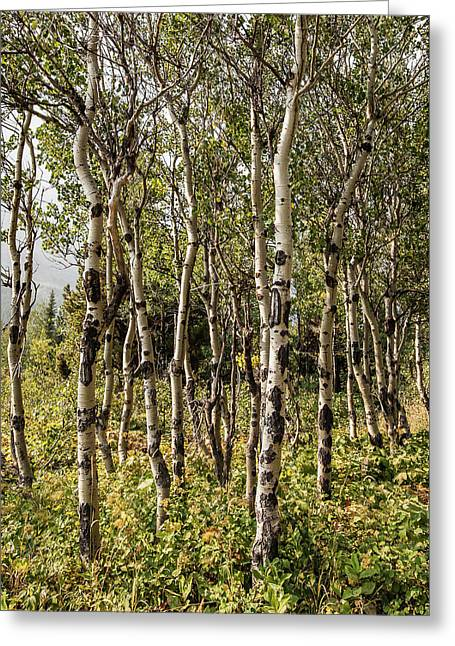 Greeting Card featuring the photograph Aspen Delight At Glacier by Lon Dittrick