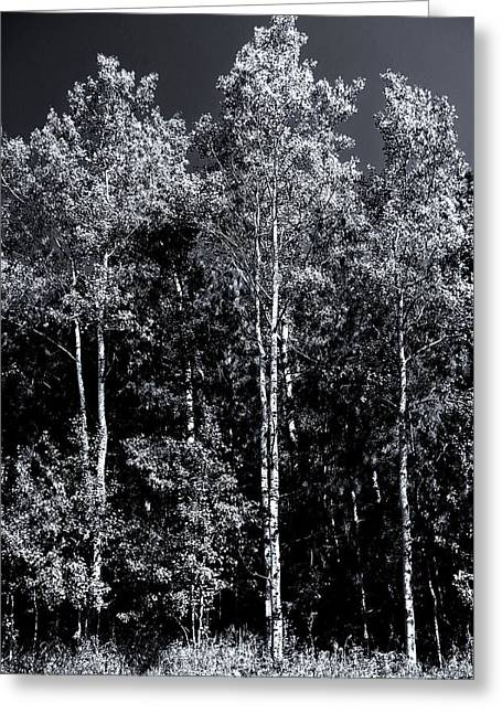 Aspen Drama Greeting Card