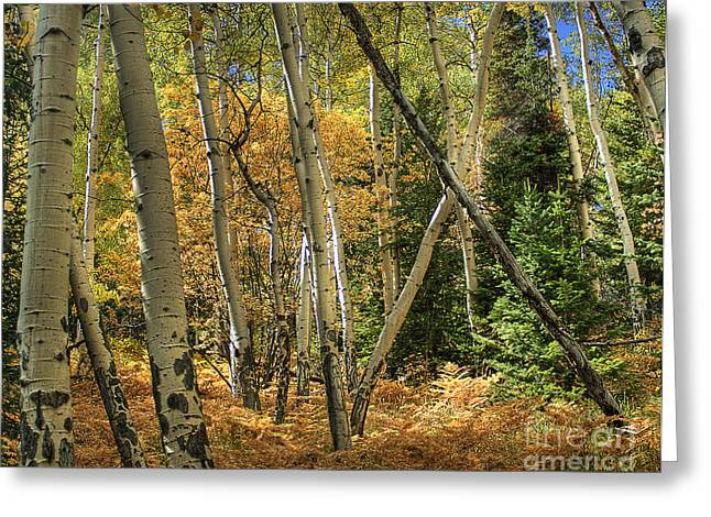 Aspen Ecosystem Greeting Card
