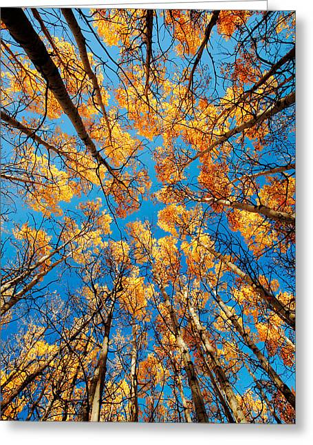 Aspen Filled Sky Greeting Card by Todd Klassy