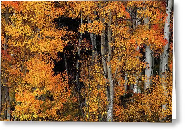 Aspen Glow Panoramic Greeting Card by Leland D Howard