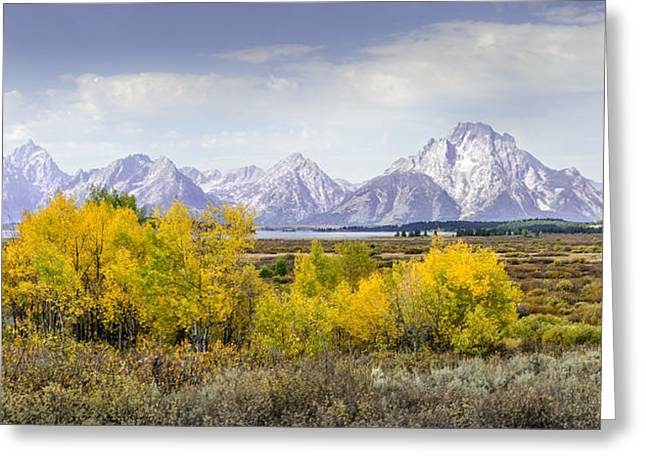 Aspen Gold In The Tetons Greeting Card
