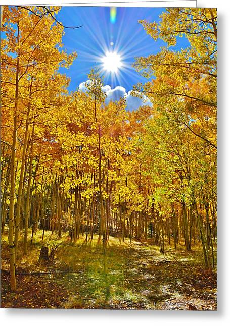 Greeting Card featuring the photograph Aspen Grove Aglow by Diane Alexander