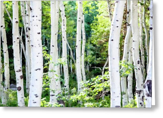 Aspen Grove Greeting Card by David Millenheft