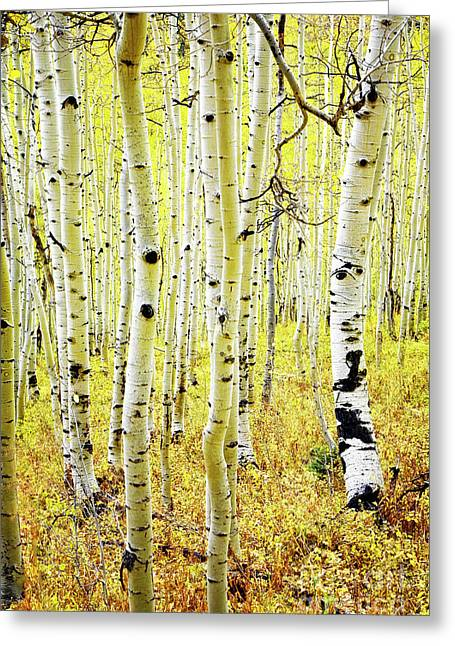 Greeting Card featuring the photograph Aspen Grove by Scott Kemper