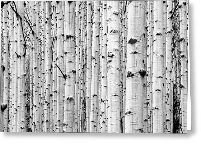 Greeting Card featuring the photograph Aspen Grove by Stephen Holst