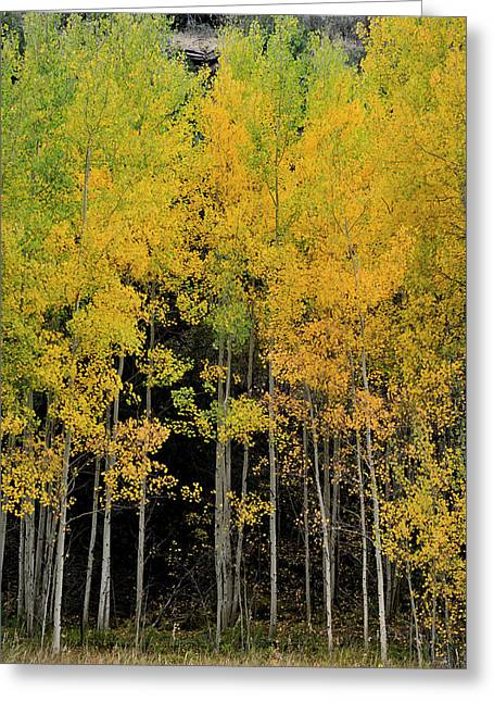 Greeting Card featuring the photograph Aspen Haven  by Ron Cline