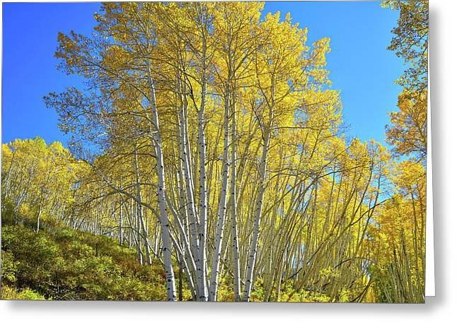 Greeting Card featuring the photograph Aspen Lane by Ray Mathis