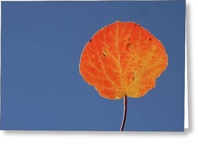 Aspen Leaf 1 Greeting Card by Marie Leslie