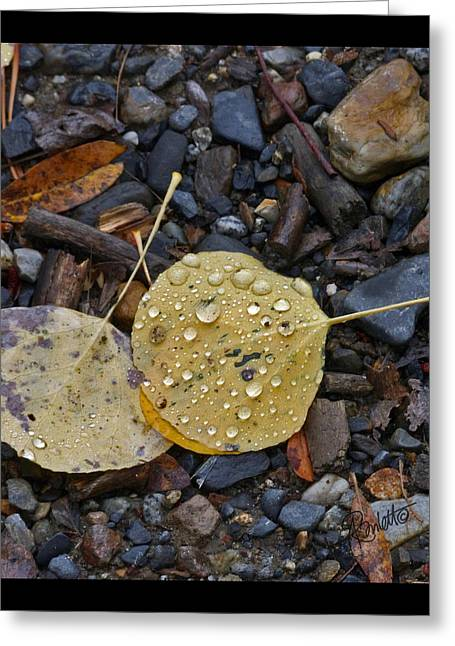 Aspen Leaf Greeting Card