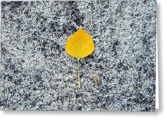 Aspen Leaf On Stone Greeting Card