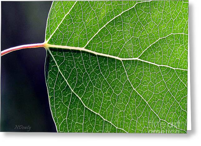 Aspen Leaf Veins Greeting Card