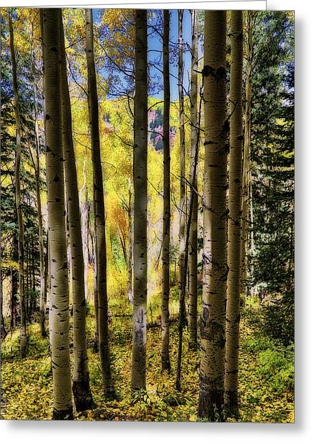 Greeting Card featuring the photograph Aspen Mood - Autumn - Colorful Colorado by Jason Politte