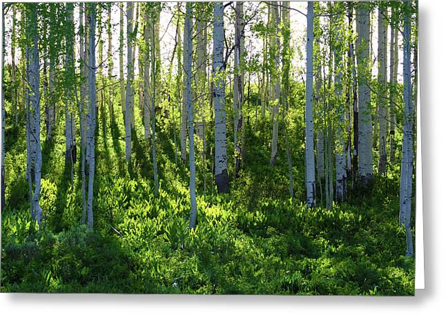 Aspen Morning 1 Greeting Card by Marie Leslie
