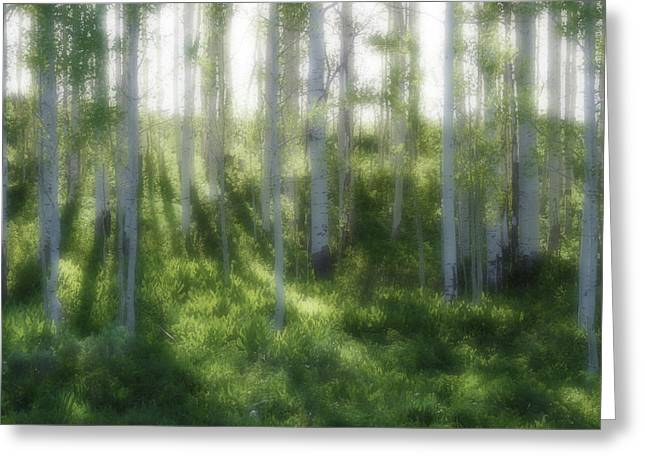 Aspen Morning 2 Greeting Card by Marie Leslie