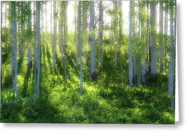 Aspen Morning 3 Greeting Card by Marie Leslie
