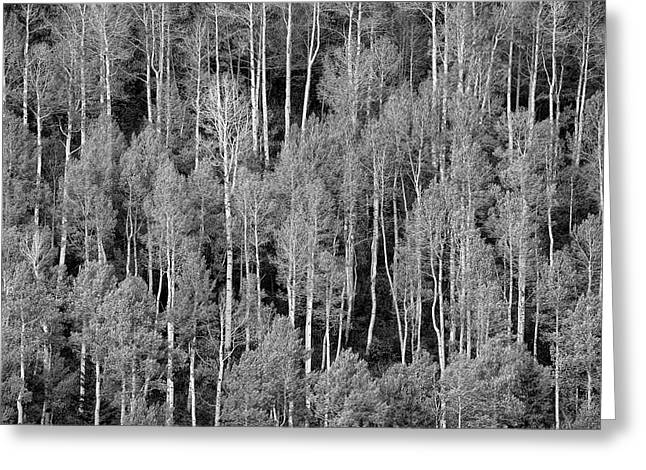 Aspen Pattern Greeting Card