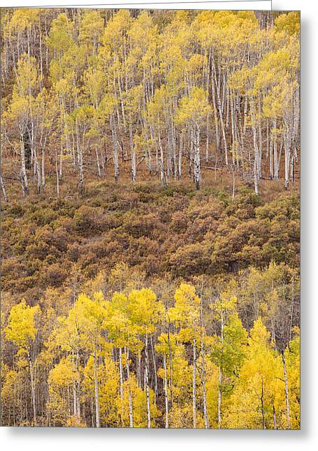 Greeting Card featuring the photograph Aspen Patterns by Patricia Davidson
