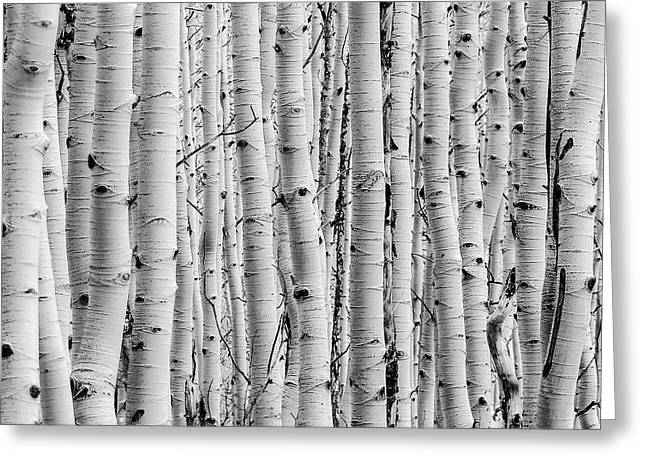 Aspen Greeting Card
