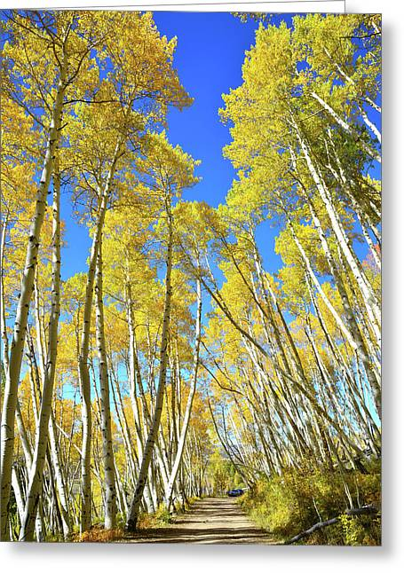 Greeting Card featuring the photograph Aspen Road by Ray Mathis