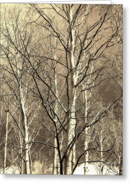 Aspen Sky White Mountains Arizona Greeting Card by Donna Greene