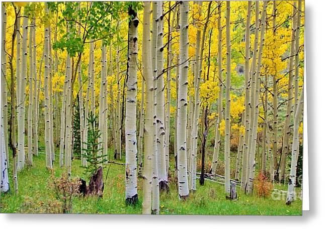 Aspen Slope Greeting Card by Ellen Heaverlo