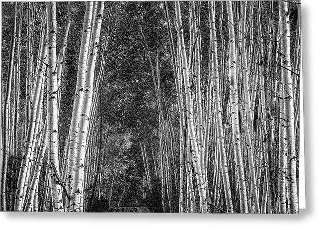 Aspen Stalwarts Greeting Card