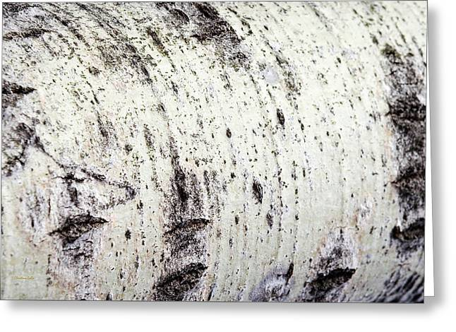 Greeting Card featuring the photograph Aspen Tree Bark by Christina Rollo