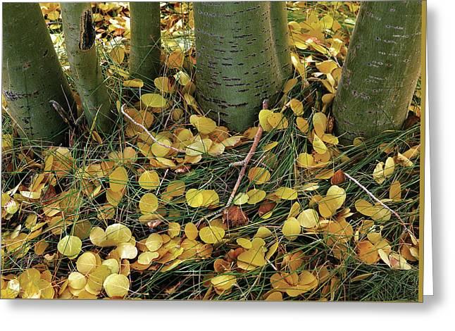 Aspen Tree Boles In Leaves Greeting Card