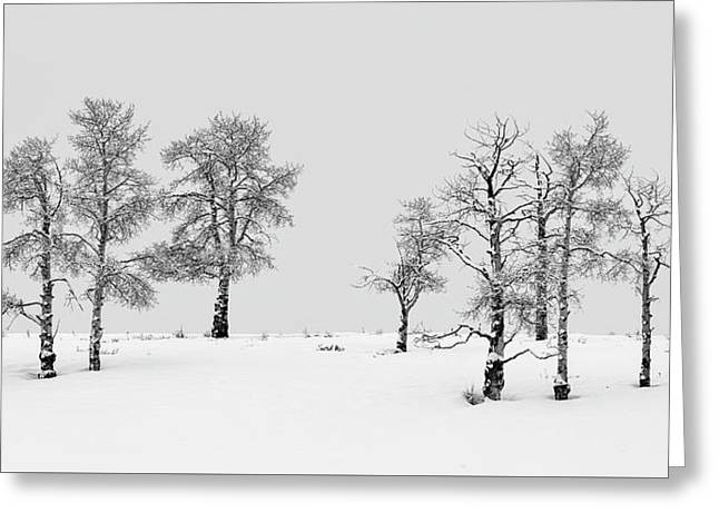 Aspen Tree Line-up Greeting Card