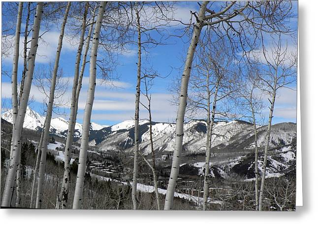 Aspen Trees In Snowmass Greeting Card