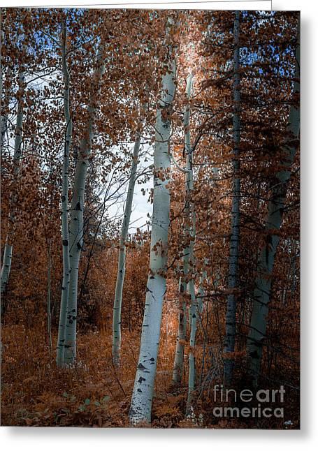 Aspen Trees Ryan Park Wyoming Greeting Card