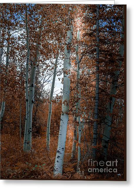 Aspen Trees Ryan Park Wyoming Greeting Card