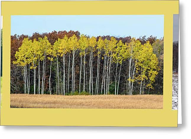 Aspen Triptych Greeting Card