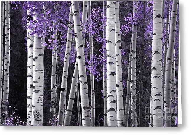 Aspen Trunks Lavender Leaves Greeting Card by John Stephens