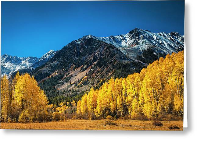 Aspen Wilderness Greeting Card by Andrew Soundarajan