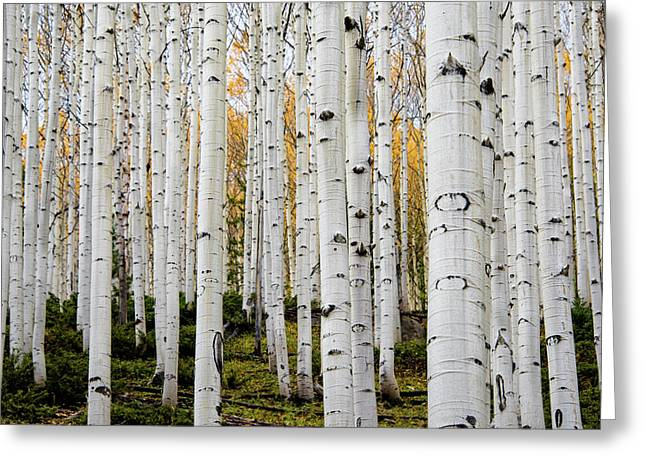 Aspens And Gold Greeting Card