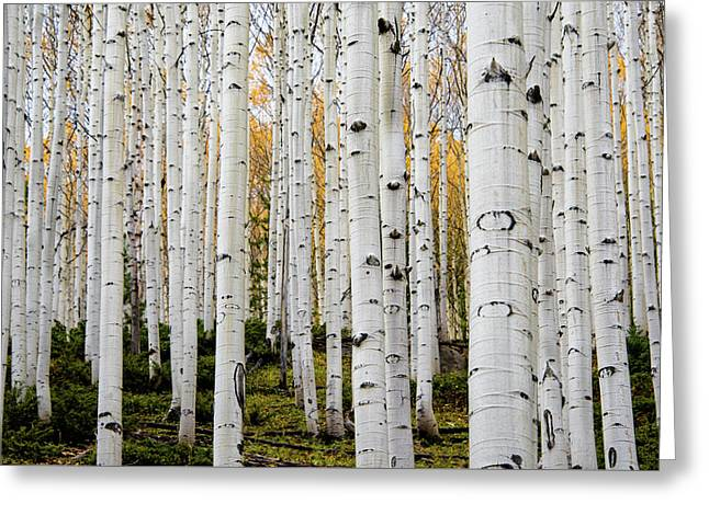Greeting Card featuring the photograph Aspens And Gold by Stephen Holst