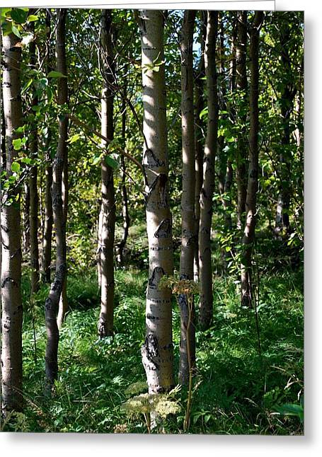 Aspens And Shadows Greeting Card by Marilynne Bull