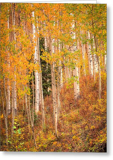 Aspens At Prime Greeting Card by Gigi Embrechts
