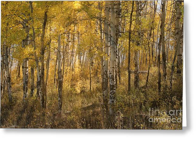 Aspens At Sunrise - Grand Tetons Greeting Card by Sandra Bronstein