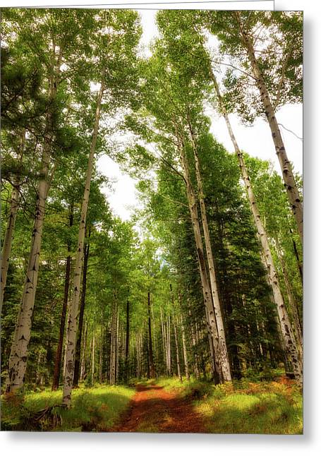 Aspens Galore Greeting Card