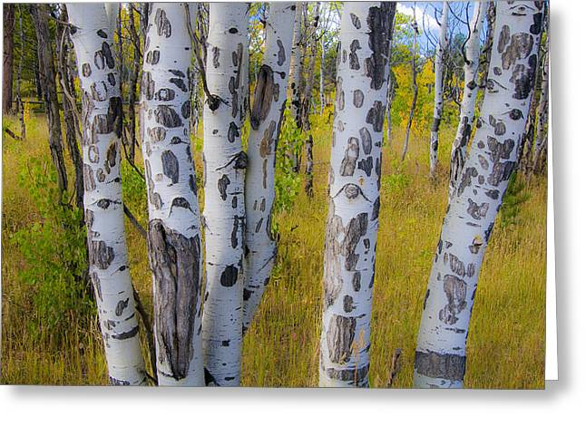 Greeting Card featuring the photograph Aspens by Gary Lengyel