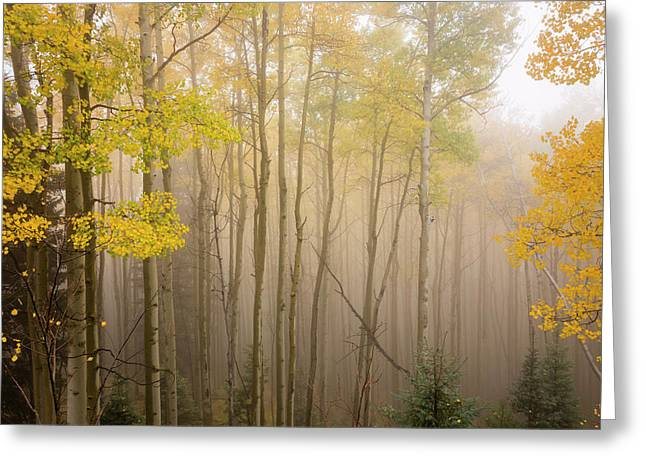 Aspens In Autumn 10 - Santa Fe National Forest New Mexico Greeting Card