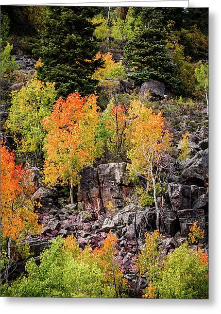 Aspens In Autumn Colors Greeting Card