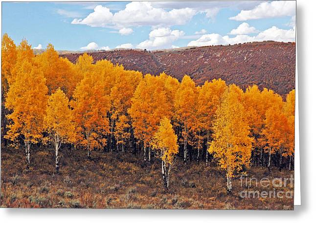 Aspens In Autumn Greeting Card by George E Richards